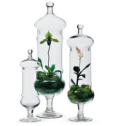 Terrariums with orchids. A Tree Grows In Bushwick: NY Times Terrarium Article Orchid Terrarium, Bottle Terrarium, Garden Terrarium, Succulent Terrarium, Gold Terrarium, Water Terrarium, Terrarium Supplies, Hanging Terrarium, Dish Garden