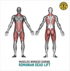 Knowledge Detail | Gold's Gym Indonesia
