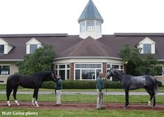 Honor Code, Liam's Map Retired To Lane's End For 2016 Breeding Season - Horse Racing News | Paulick Report