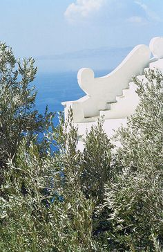 Tinos-olive trees with the sea in the background.