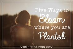 5 ways to bloom where you are planted
