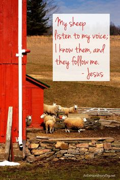 """I had a 'real life' experience with some sheep that opened my eyes to John 10:27... """"My sheep listen to my voice; I know them, and they follow me."""" Just a few words and a whole lot of photos tell a story that hits home. Please join me!"""