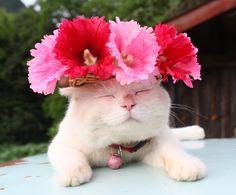 Cat in a Pretty Flower Hat. Kittens Cutest, Cats And Kittens, Animals And Pets, Cute Animals, Cat Wedding, Cat Dresses, Cat Aesthetic, Cat Hat, Pet Costumes