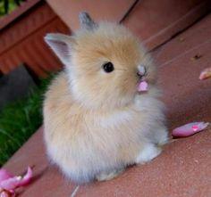 http://gobtube.com Cute bunny