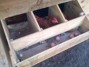 Great idea! Roll away egg nest boxes from Outpost