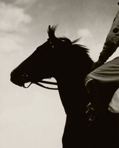 Race Horse Gallant Fox Art Print by Edward Steichen. All prints are professionally printed, packaged, and shipped within 3 - 4 business days.