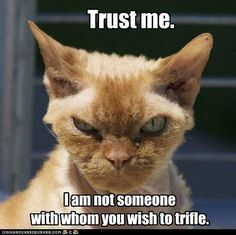 serious cat, don't trifle with.
