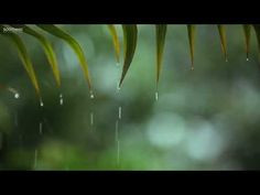 Relaxing music with soft rain that can be described as relaxing piano music, sleep music, peaceful music and romantic music. Instrumental music composed by . Rain Music, Yoga Music, Meditation Music, Music Mix, Music Guitar, Mode Yoga, Sound Of Rain, Rain Sounds, Make Mine Music