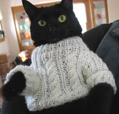 Cat in cable #knit sweater.  I have never met a cat that would let me put a sweater on him/her.  This is a very special cat!
