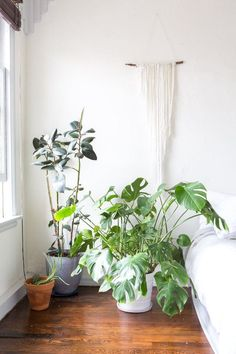 """Propagation Station: How To Make Plant Babies 