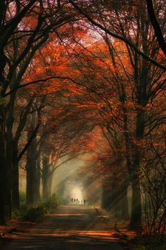 ✮ Beautiful Path