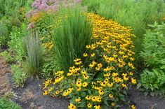 , Design a Flowering Rain Garden to Reduce Flooding [. , Design a Flowering Rain Garden to Reduce Flooding Cool Plants, Rain Garden Design, Backyard Landscaping, Low Maintenance Garden Design, Landscape Design, Low Maintenance Garden, Garden Planning, Garden Design, Flower Landscape