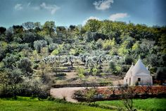 Enchanting countryside near Cisternino and Ostuni!