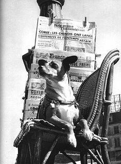 Chien au grelot, Boulevard Poissonnière, Paris, 1957  ©Izis Bidermanas