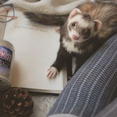 See this Instagram photo by @thebookferret • 832 likes