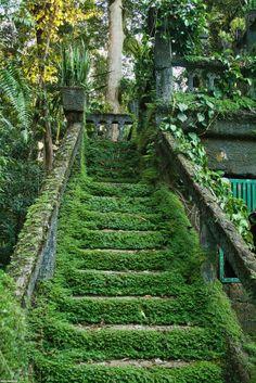 Arbres – Branches – Escalier – Plantes – Verdure
