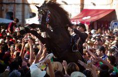 Menorquin horse in the festivity of Sant Joan
