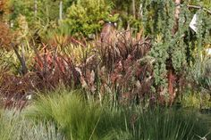 Charmant San Lorenzo Garden Center   Santa Cruz, CA, United States