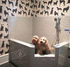 Dog shower by Amy Vermillion I . Dog Shower by Amy Vermillion Interiors LLC,