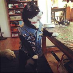 Cat in a punk rock vest. Cat in a punk rock vest!