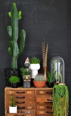 houseplants display ideas (3)