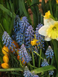 Kerri Messner added 124 new photos to the album: Philadelphia International flower show — at Pennsylvania Convention Center - Philadelphia, PA (Philly). Flower Show, Spring, Flowers, Plants, Plant, Royal Icing Flowers, Flower, Florals, Floral