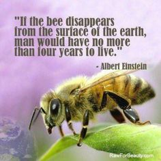 At Aveda we are big fans of honey bees – we have a lot to thank them for: their ingenious pollination process brings one third of every bite of food to our table. But in recent years it is believed they're under threat, possibly due to systemic pesticide neonicotinoids  used in conventional farming.