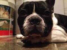 My baby bulldog Rocky!
