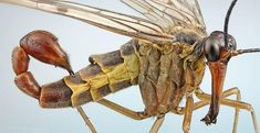 insetos-mais-aterrorizantes-natureza_6