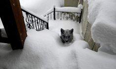 """""""Al principio no supe muy bien de qué tipo de animal se trataba, pensé que era un perro grande"""", afirma Óscar Montero, vecino de Prioro. No lo tocó porque """"la madre podría estar cerca y era peligroso"""". """"Abrí la puerta de la vivienda, el animal se dio la vuelta y rápidamente se escabulló por detrás de la casa""""."""