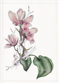 Magnolia Burdock composition by Arobal on Etsy Magnolias, Rooster, Composition, Patterns, Gallery, Drawings, Plants, Etsy, Animals