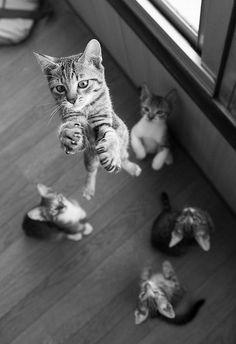 Herkese güzel, keyifli ve tatlı bir haftasonu dileriz :) #birkediistiyorum #kedi