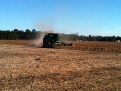Soybeans (Nov 2013)