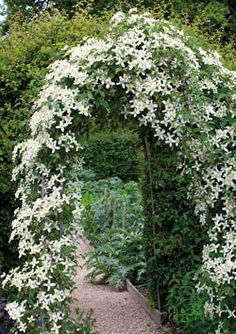 for every month of the year Clematis wilsonii 'Montana' - a gorgeous climber!Clematis wilsonii 'Montana' - a gorgeous climber! Moon Garden, Dream Garden, Big Garden, Hidden Garden, Garden Kids, Beautiful Gardens, Beautiful Flowers, White Flowers, Exotic Flowers