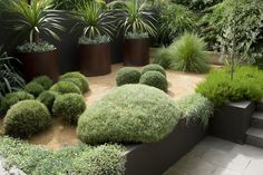 Three matching pots planted up with Cordyline australs - Image by Jason Busch,  Northbridge home.