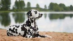 Dogs, Animals, Dog, Animales, Animaux, Pet Dogs, Doggies, Animal, Animais