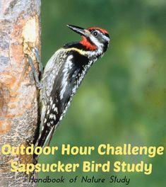 Outdoor Hour Challenge I found this cool feeder Journal Entries, Journal Ideas, Bird Migration, Hanging Bird Feeders, Bird Crafts, Study Ideas, Autumn Nature, Nature Study, Nature Journal