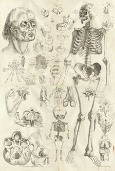 Engraving showing a large facing standing skeleton on the right side of the page with a human head on the left with skin pulled away to reveal eye and jaw muscles; between the two is a fetal skeleton at bottom and numerous depictions of bones including a skull viewed from the bottom, the hip joint, the mandible, individual vertebrae, the hyoid bone, and a detail of the muscles of the eye; from Amé Bourdon's Nouvelles tables anatomiques, Cambray, 1678.