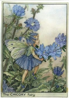 """The Chicory Fairy .... """"By the white-cart road, dusty and dry, Look! there is Chicory, blue as the sky!  Or, where the footpath goes through the corn, see her bright flowers, each one new-born!  Though they fade quickly, O, have no sorrow!  There will be others new-born tomorrow!"""""""