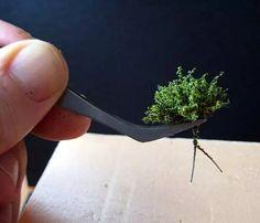 Tutorial para la Fabricacion de Arbustos o Setos.