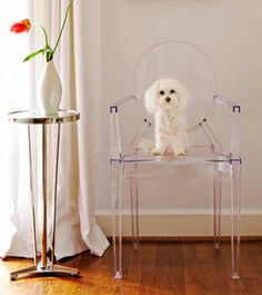 Philippe Starck's Ghost chair - arf arf