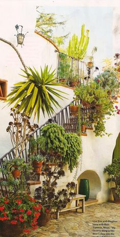 lush and exotic: an arid garden