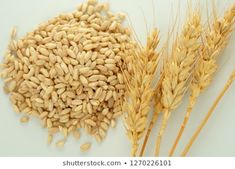 Find whole-grain-oats stock images in HD and millions of other royalty-free stock photos, illustrations and vectors in the Shutterstock collection. Royalty Free Images, Royalty Free Stock Photos, Grains, Hair Accessories, Hair Accessory, Seeds, Korn