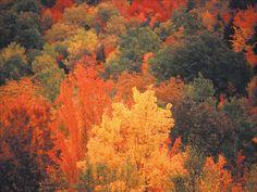 Color Inspiration - Autumn Leaves