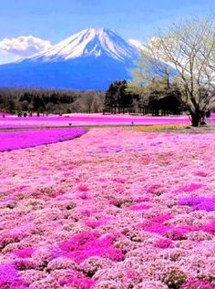 Mount Fuji, Japan. Travel to new heights   and marvel at the highest mountain in Japan.