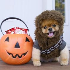 We're OBSESSED with @jiffpom's #Halloween costume. Reposted Via @aolentertainment