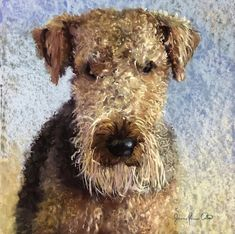 'Just Bathed TJ', soft pastel on sanded paper, by Joanne Power Cotton. My Favourite Subject, Pastel Watercolor, Airedale Terrier, Animal Paintings, Textile Design, Wildlife, Teddy Bear, Fine Art, Landscape