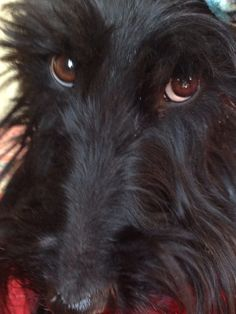 Those eyes.... Well let's just say I am putty... Steak, okay you can have it... Ice cream - okay!
