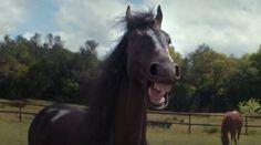 Horses Find This Funny - Neatorama