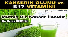 Kanser diye bir şey yok sadece B17 vitamini eksikliği var. | Bitkilog Cancer, Herbs, Health, Food, Health Care, Essen, Herb, Meals, Yemek